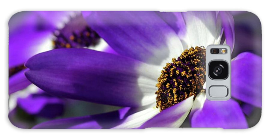 Flower Galaxy S8 Case featuring the photograph Purple Daisy by Sabrina L Ryan