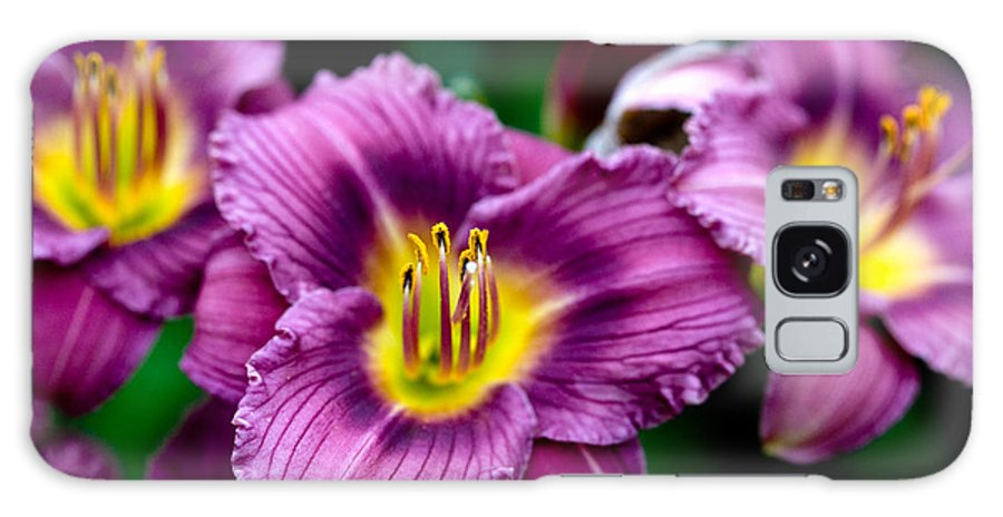 Flower Galaxy Case featuring the photograph Purple Day Lillies by Marilyn Hunt
