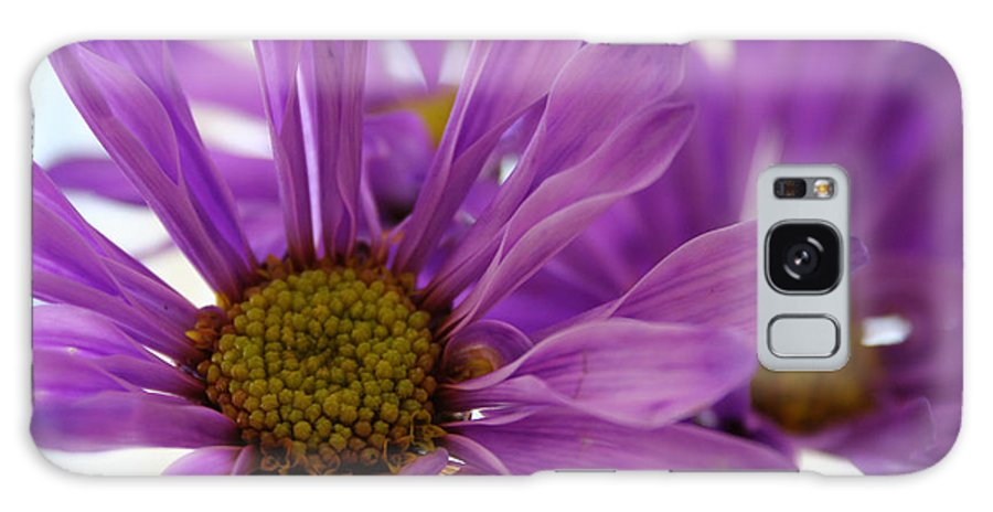 Flowers Purple Macro Daisy Spring Yellow Digital Photography Galaxy S8 Case featuring the photograph Purple Delight by Linda Sannuti