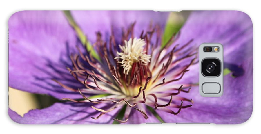 Purple Galaxy S8 Case featuring the photograph Purple Flower by Lauri Novak