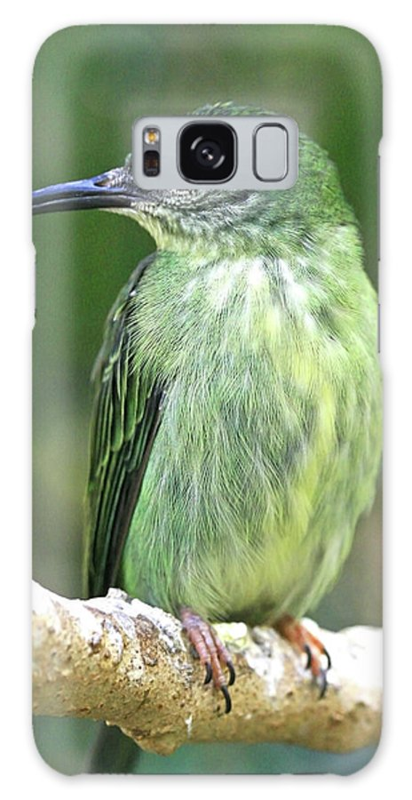 Bird Galaxy S8 Case featuring the photograph Purple Honeycreeper Female by David Freuthal
