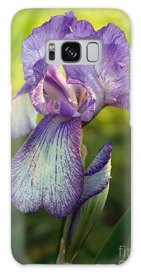 Flower Galaxy Case featuring the photograph Purple Iris In Late Afternoon by Anna Lisa Yoder