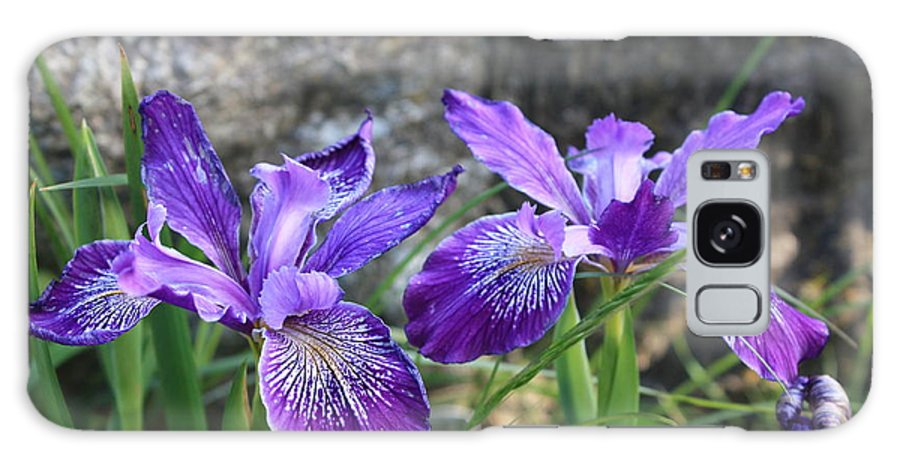 Purple Galaxy S8 Case featuring the photograph Purple Irises With Gray Rock by Carol Groenen