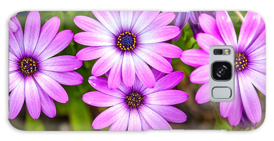 Spring Flowers Galaxy S8 Case featuring the photograph Purple Pals by Az Jackson
