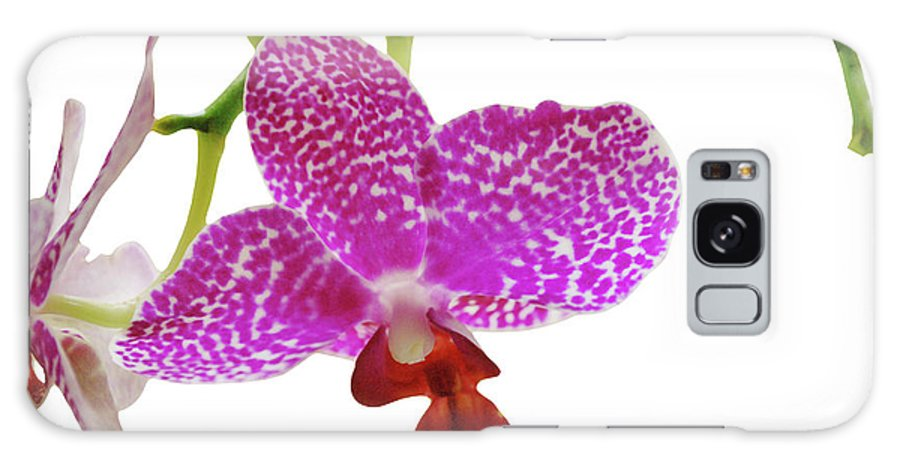 Phalaenopsis Galaxy S8 Case featuring the photograph Purple Spotted Orchid On White by Heather Kirk