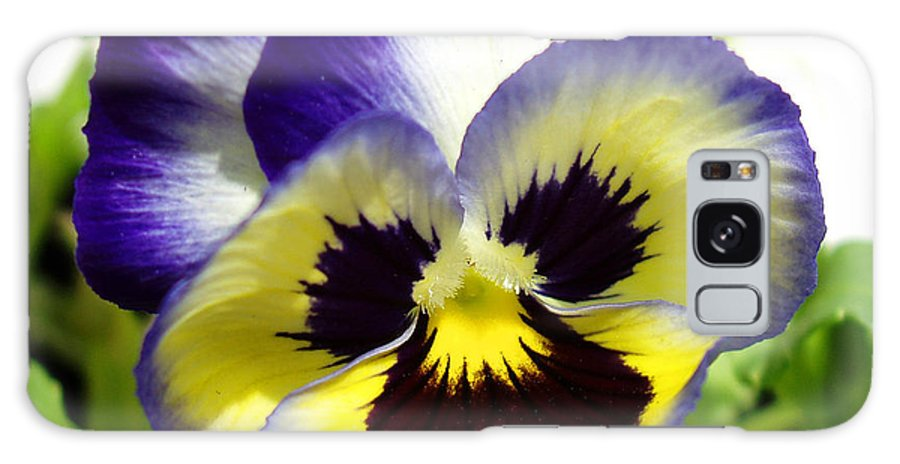 Pansy Galaxy S8 Case featuring the photograph Purple White And Yellow Pansy by Nancy Mueller