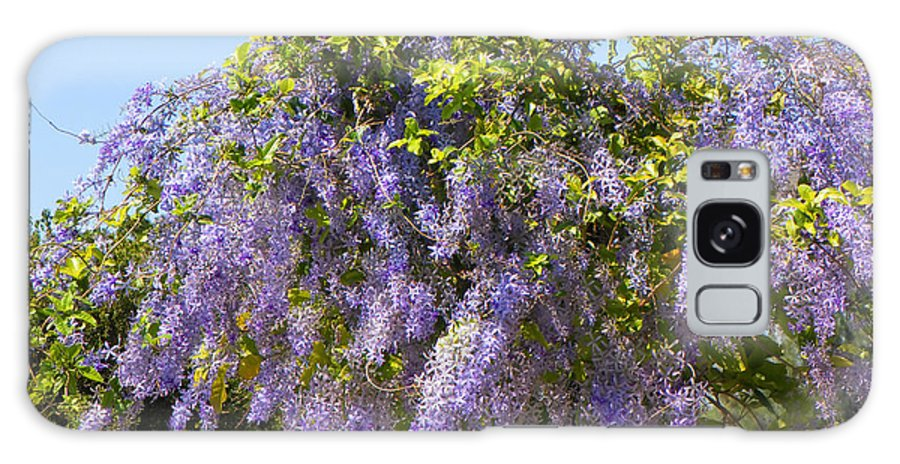 Flowers Galaxy S8 Case featuring the photograph Queen's Wreath Vine by Rosalie Scanlon