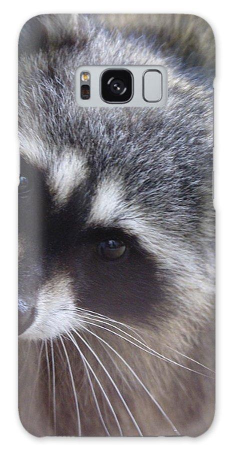Spokane Galaxy S8 Case featuring the photograph Raccoon by Ben Upham III