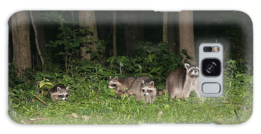 Racoon Galaxy S8 Case featuring the photograph Raccoon Family by George Jones