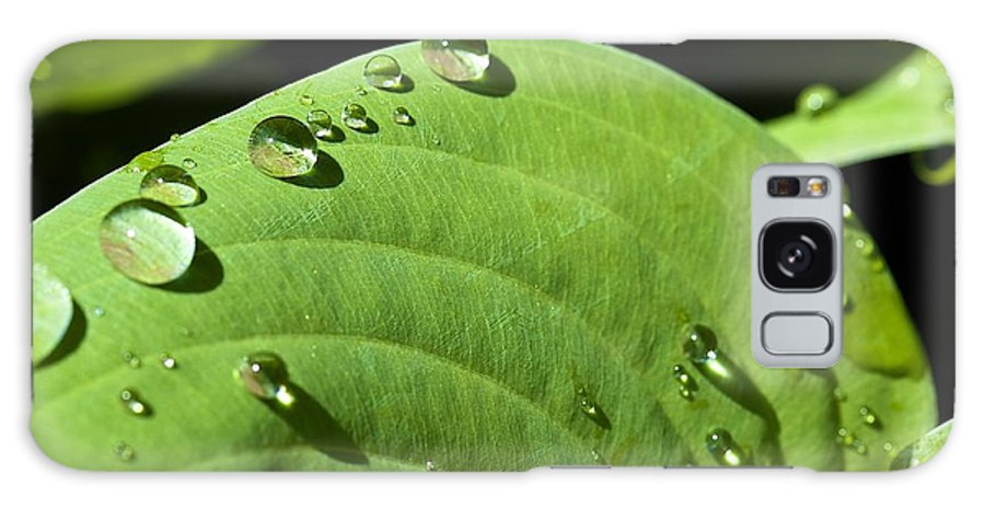 Rain Galaxy S8 Case featuring the photograph Rain On Leaf by Robert Skuja