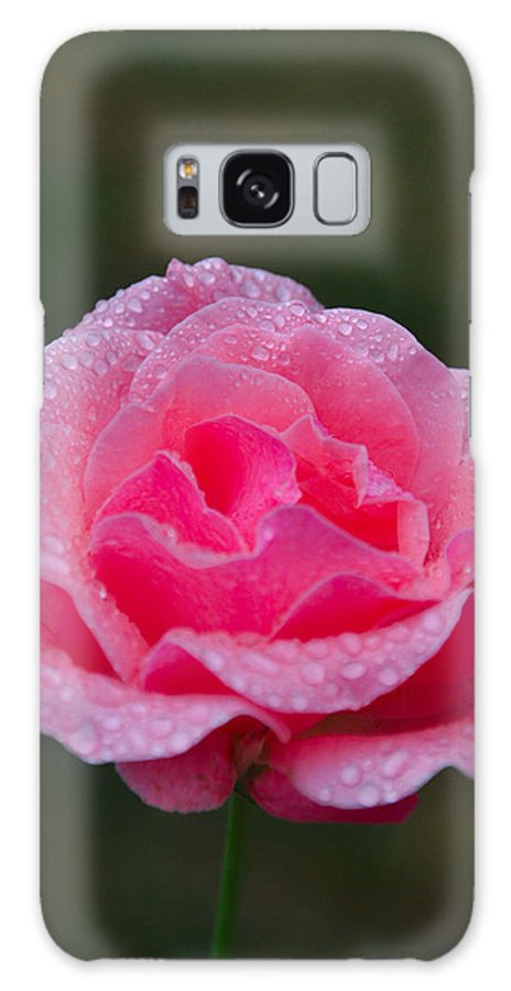 Roses Galaxy S8 Case featuring the photograph Rain Spattered Rose by Noah Cole
