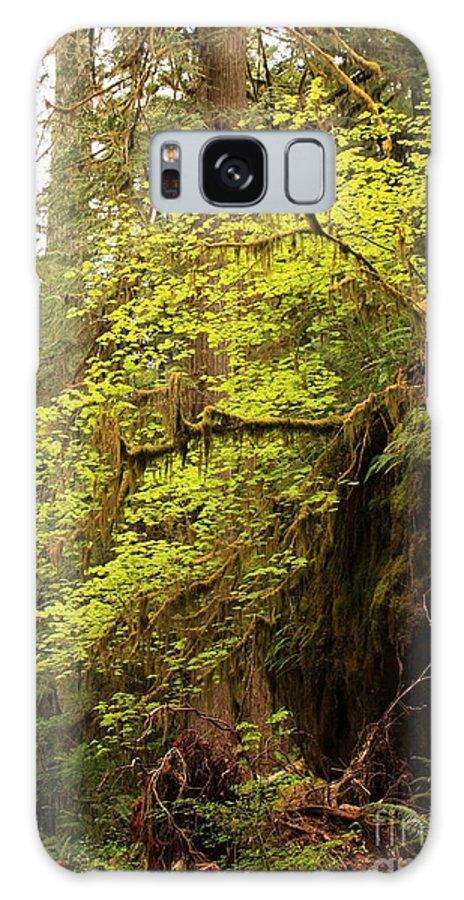 Awakening Galaxy S8 Case featuring the photograph Rainforest Awakening by Carol Groenen