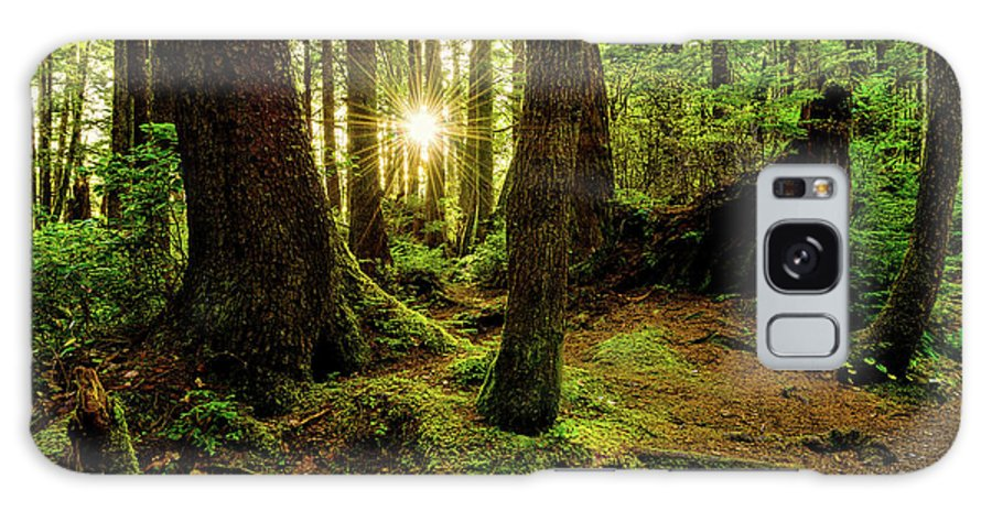Rainforest Galaxy S8 Case featuring the photograph Rainforest Path by Chad Dutson
