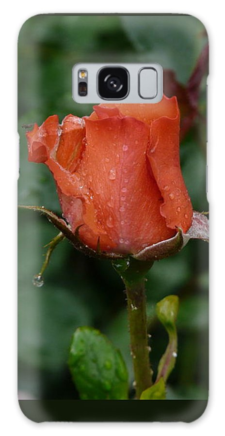 Flower Galaxy Case featuring the photograph Rainy Rose Bud by Valerie Ornstein