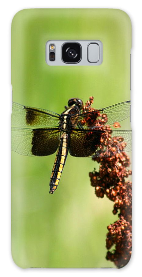 Bug Galaxy S8 Case featuring the photograph Rally Stripe Dragonfly 7 by David Dunham