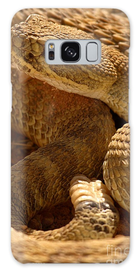 Rattlesnake Galaxy S8 Case featuring the photograph Rattlesnake And Rattle by Max Allen
