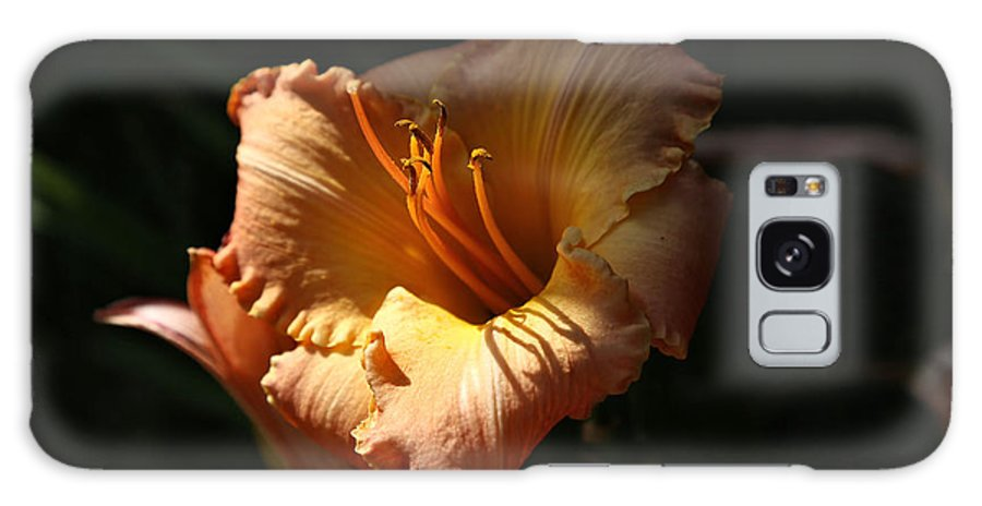 Hybrid Lily Galaxy S8 Case featuring the photograph Reaching For The Light by Theresa Campbell