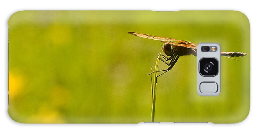 Dragonfly Galaxy Case featuring the photograph Ready For Flight by Douglas Barnett