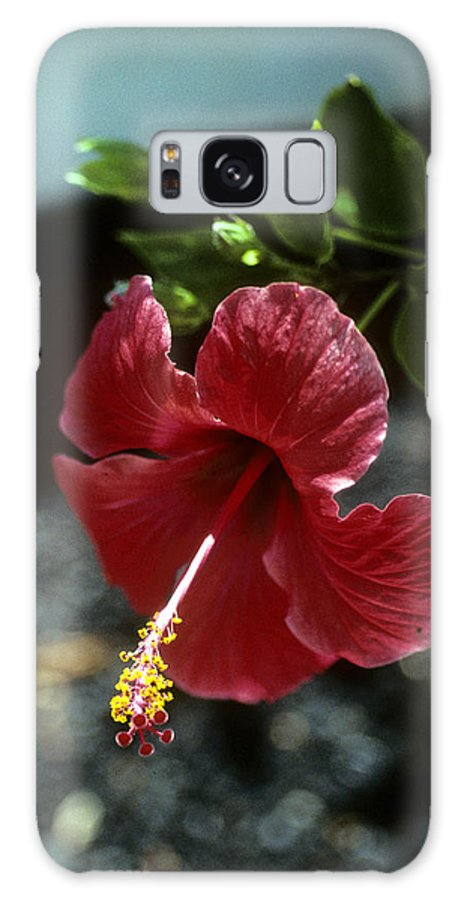 Orchid Galaxy S8 Case featuring the photograph Ready For Picking by Gary Wonning