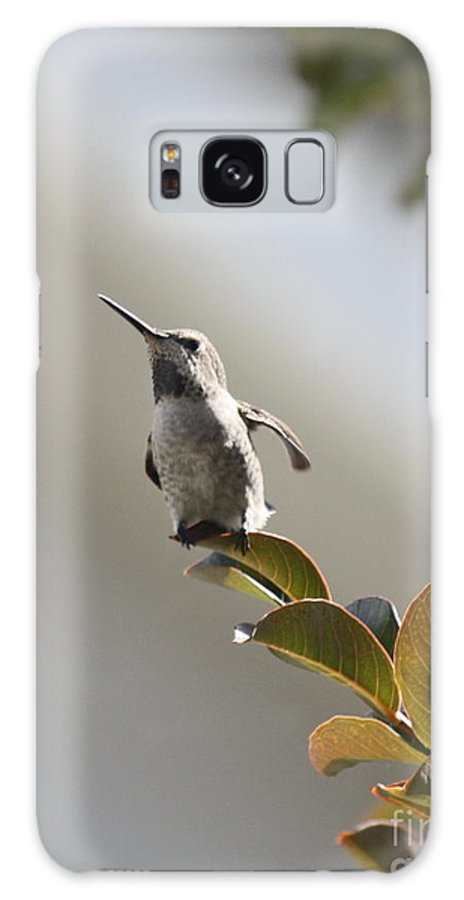 Hummingbird Galaxy S8 Case featuring the photograph Ready For Takeoff by Carol Groenen