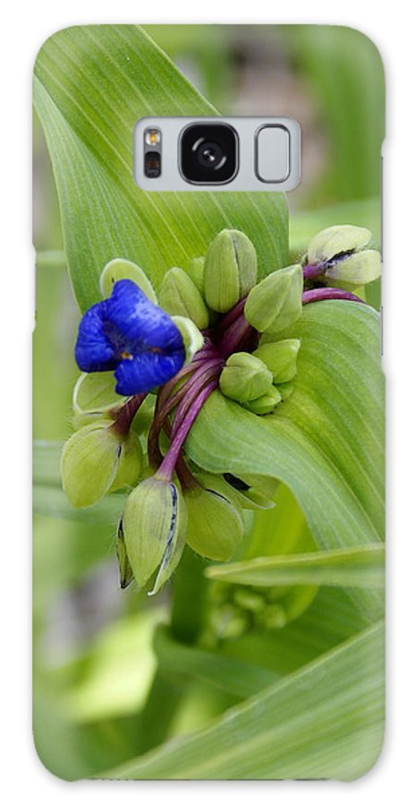 Flowers Galaxy S8 Case featuring the photograph Ready To Rise by Ben Upham III