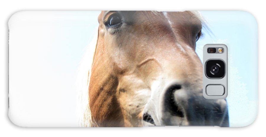 Horse Galaxy Case featuring the photograph Really by Amanda Barcon