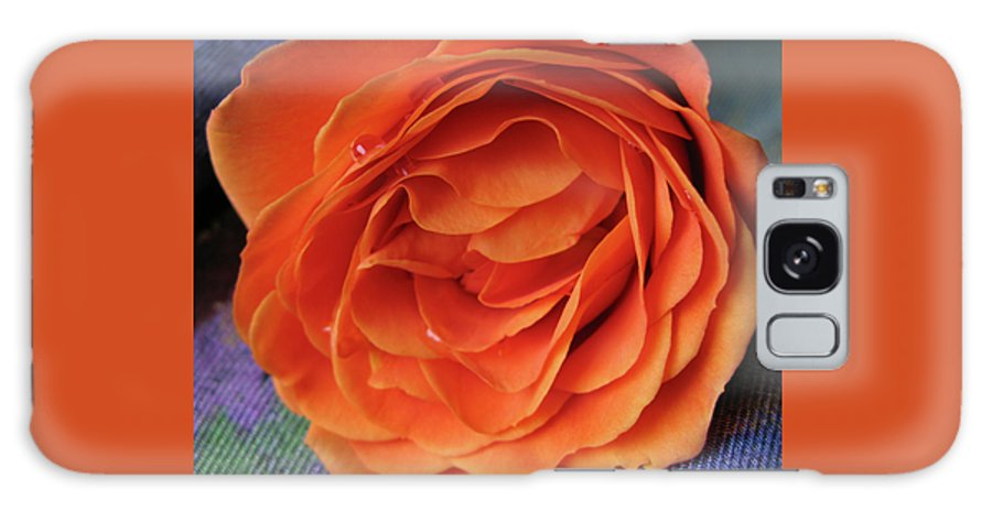 Rose Galaxy Case featuring the photograph Really Orange Rose by Ann Horn