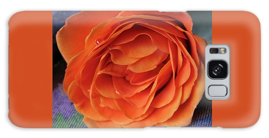 Rose Galaxy S8 Case featuring the photograph Really Orange Rose by Ann Horn