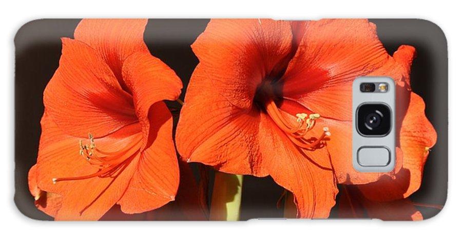 Amaryllis Flower Galaxy S8 Case featuring the photograph Red Amaryllis by Georgeta Blanaru