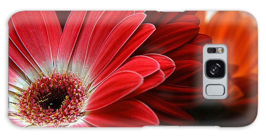 Clay Galaxy S8 Case featuring the photograph Red And Orange Florals by Clayton Bruster