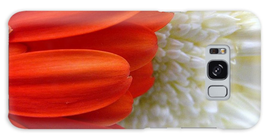 Flowers Galaxy S8 Case featuring the photograph Red And White by Rhonda Barrett
