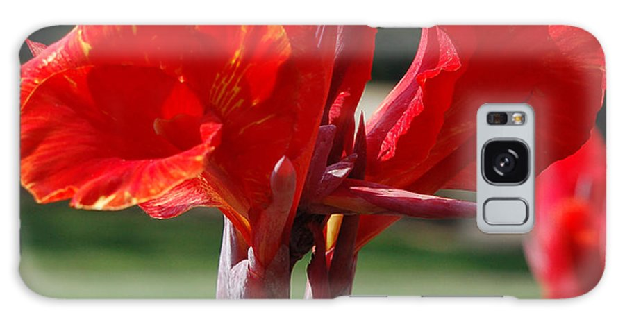 Asiatic Lily Galaxy Case featuring the photograph Red And Yellow Asiatic Lilies by Suzanne Gaff