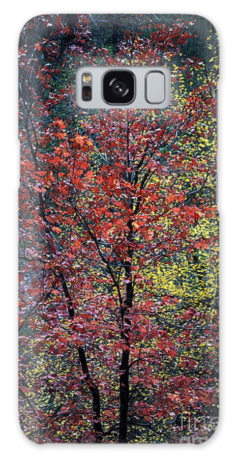 Landscape Galaxy S8 Case featuring the photograph Red And Yellow Leaves Abstract Vertical Number 1 by Heather Kirk