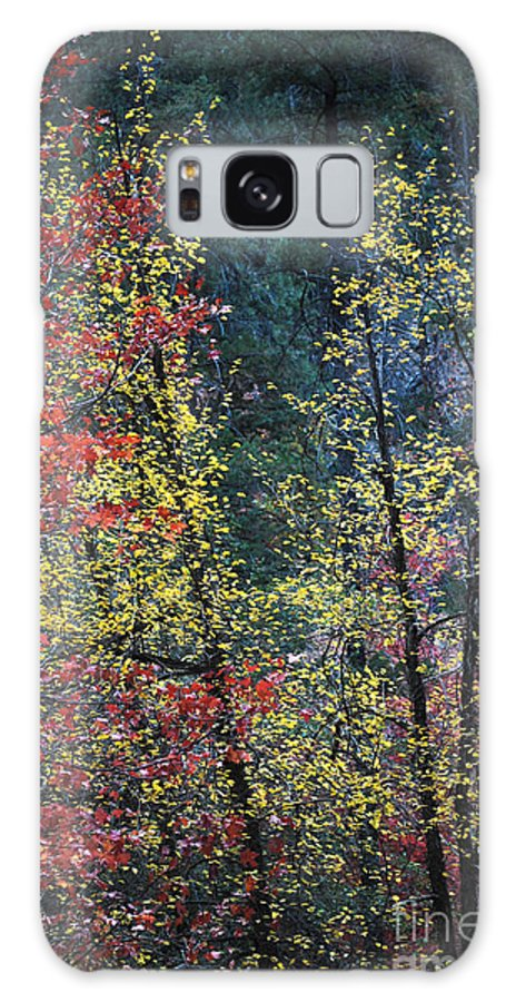 Landscape Galaxy S8 Case featuring the photograph Red And Yellow Leaves Abstract Vertical Number 2 by Heather Kirk