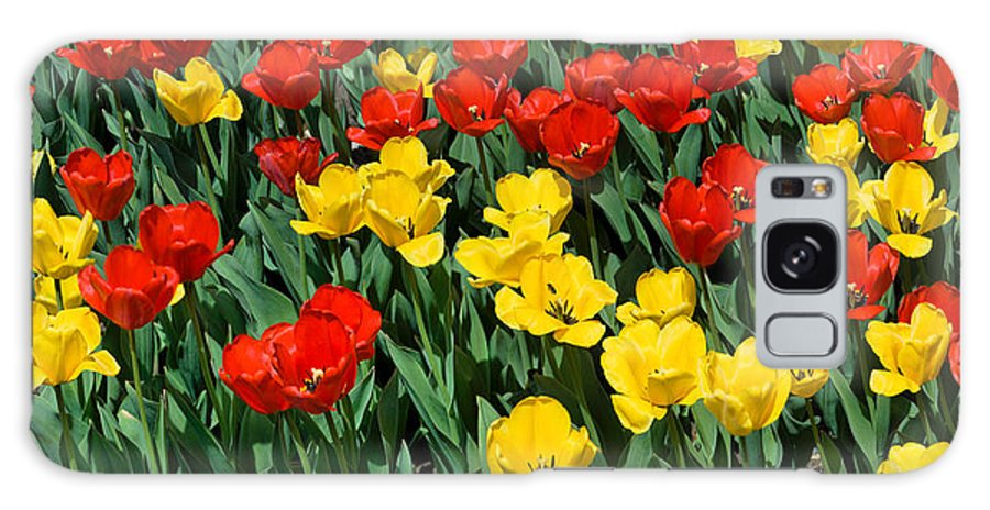 Red Galaxy S8 Case featuring the photograph Red And Yellow Tulips Naperville Illinois by Michael Bessler