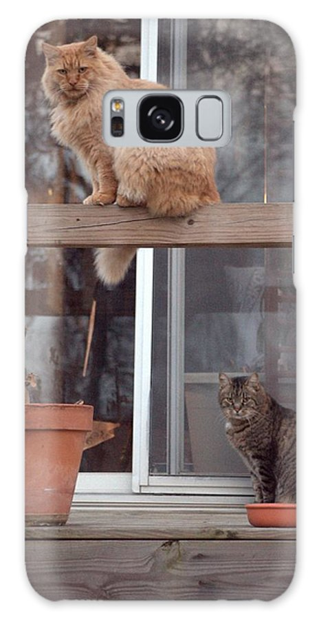 Cats Photograph Galaxy S8 Case featuring the photograph Red, Bella And Oliver by J R Seymour