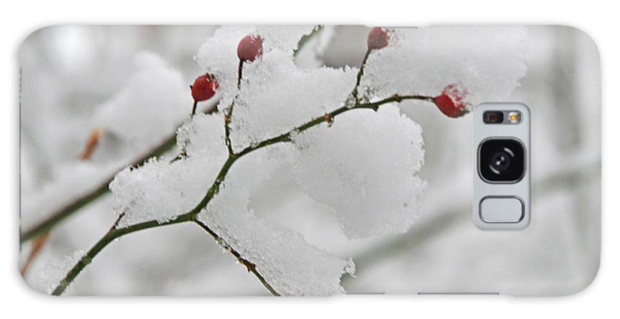 White Galaxy S8 Case featuring the photograph Red Berries by Linda Seacord