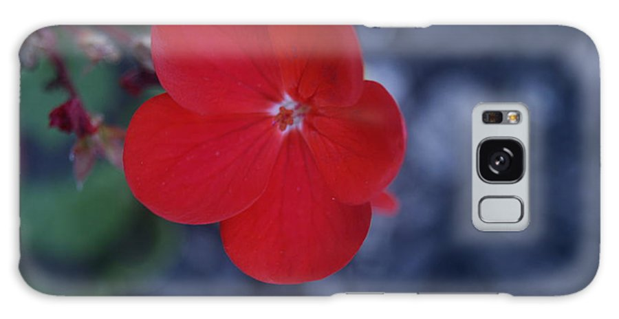 Flower Galaxy S8 Case featuring the photograph Red Blossoms by Justin Soules