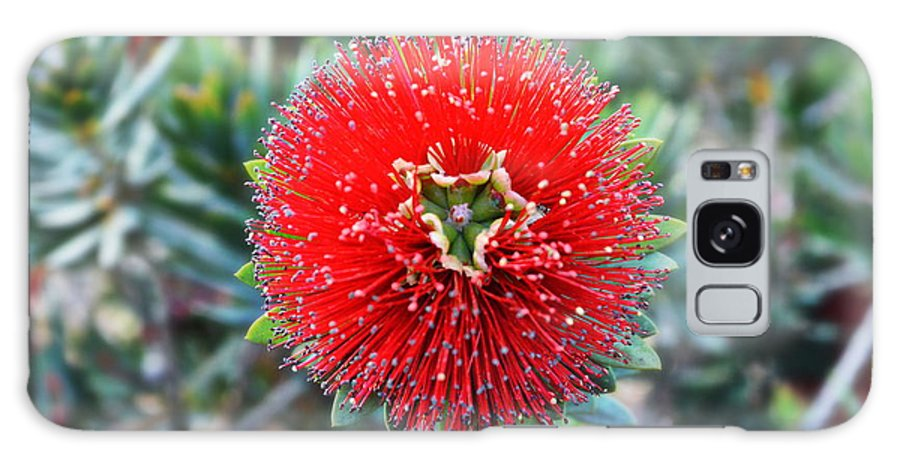 Bottlebrush Galaxy S8 Case featuring the photograph Red Bottlebrush by Glenn McCarthy Art and Photography