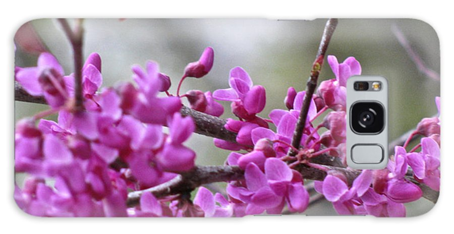 Red Bud Blossoms Galaxy S8 Case featuring the photograph Red Bud Blossoms by Debra   Vatalaro