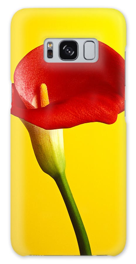 Red Yellow Flower Flowers Calla Lily Lilies Stem Yellow Graphic Design Bright Color Colors Colour Colours Colorful Distinctive Lilum Lilys Arum Bulb Close Up Detail Details Beauty Nature Beautiful Blossom Delicate Fragile Growing Vertical Plant Plants Concepts Decoration Bloom Blooming Botanical Floral Horticulture Floriculture Blossoming Flowering Petal Serenity Stamen Majestic Grow Unusual Galaxy S8 Case featuring the photograph Red Calla Lilly by Garry Gay
