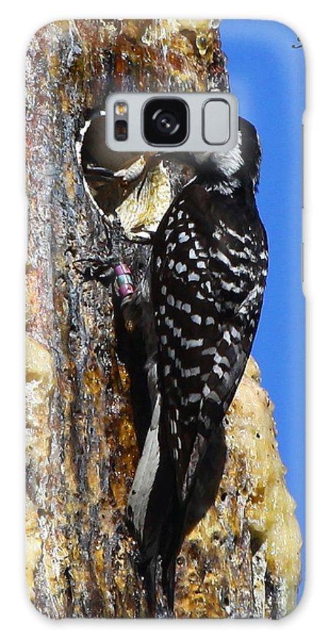 Red Cockaded Woodpecker Galaxy S8 Case featuring the photograph Red Cockaded Woodpecker Mother Feeding by Barbara Bowen