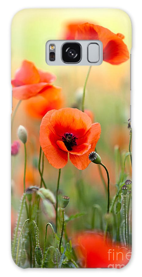 Poppy Galaxy Case featuring the photograph Red Corn Poppy Flowers 06 by Nailia Schwarz