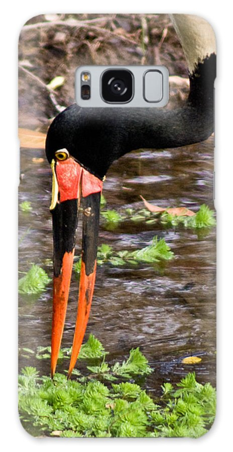Red Galaxy Case featuring the photograph Red-crowned Crane by Douglas Barnett