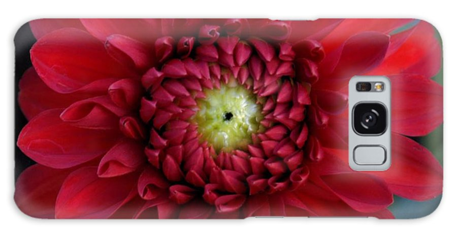 Dahlia Galaxy S8 Case featuring the photograph Red Dahlia Square by Patricia Strand