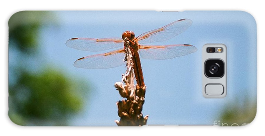 Dragonfly Galaxy S8 Case featuring the photograph Red Dragonfly by Dean Triolo