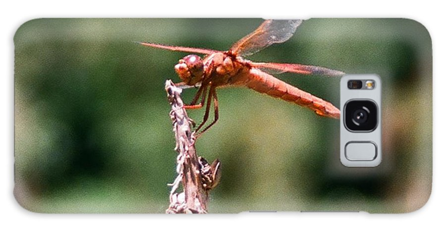 Dragonfly Galaxy S8 Case featuring the photograph Red Dragonfly II by Dean Triolo