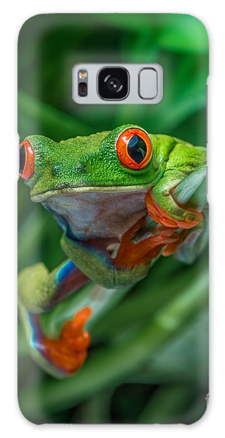 Frog Galaxy S8 Case featuring the photograph Red Eyed Tree Frog by Yasar Ugurlu