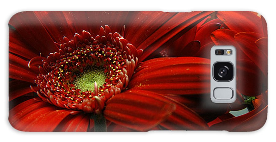 Clay Galaxy S8 Case featuring the photograph Red Floral by Clayton Bruster