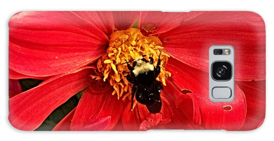 Flower Galaxy S8 Case featuring the photograph Red Flower And Bee by Anthony Jones